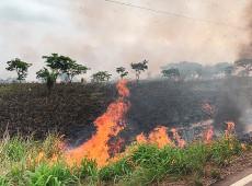 Advierten que nuevo decreto de Bolsonaro incrementará deforestación amazónica