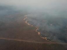 Cuáles son los intereses económicos que impulsan la destrucción de la Amazonía?