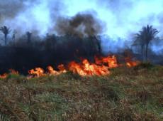 Récord preocupante: hubo 72 mil focos de incendios en la Amazonia desde enero